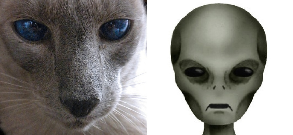 Are Cats Aliens From Outer Space?